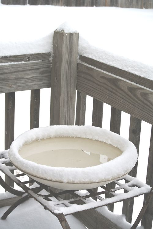 Bird Bath in Snow
