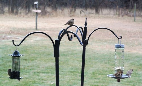 Birds at Feeders 1
