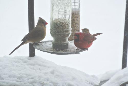 2014Feb4 Cardinal Pair