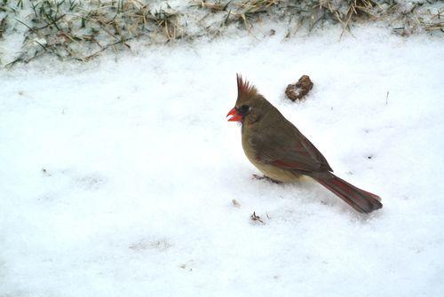 2014Mar2 Spike Cardinal 2