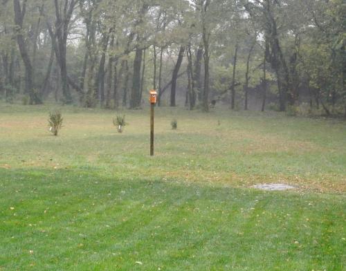 New Bluebird Nesting Box Gets Rain