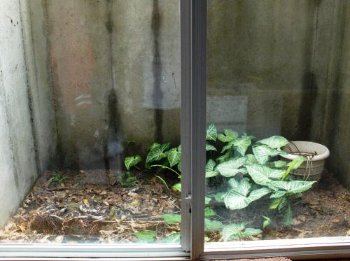 Basement Emergency Escape Window