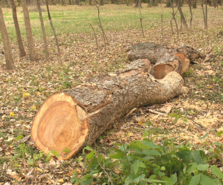 More Wood 1