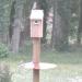 Three Bluebirds around Nesting Box - 2018Jun13