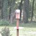 Bluebirds on Nesting Box - 2018Jun13 - Closeup 1