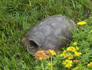 2019May25 - Leery Turtle