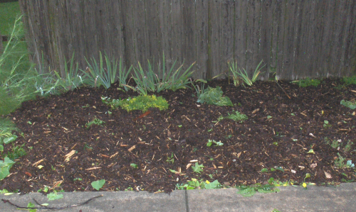 Storm - Planting Bed mulched yesterday - with leaves blown in