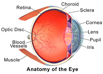Anatomy_of_Eye