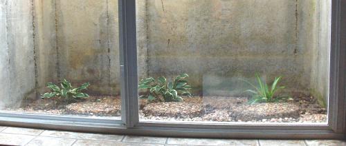 Window Well - 2019Aug23