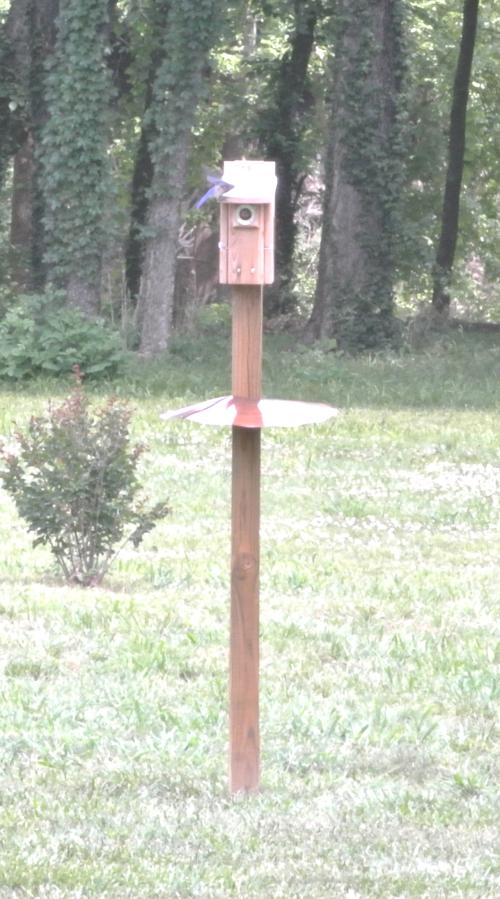Bluebirds on Nesting Box - 2018Jun13