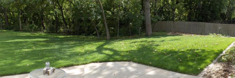 2020Sep23 - Cottonwood Leaves