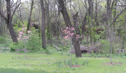 3 Dogwoods
