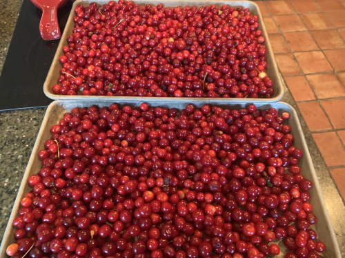 2020Jun7 - More Cherries WH Picked