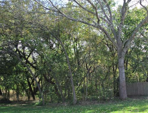 Before - near woods